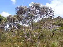 field guide to eucalypts volume 1 south-eastern australia